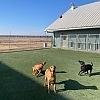 Good Dog Pet Ranch